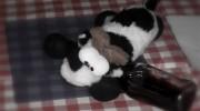 WFT 2012 | Am nächsten Morgen: Kuh mit Kater